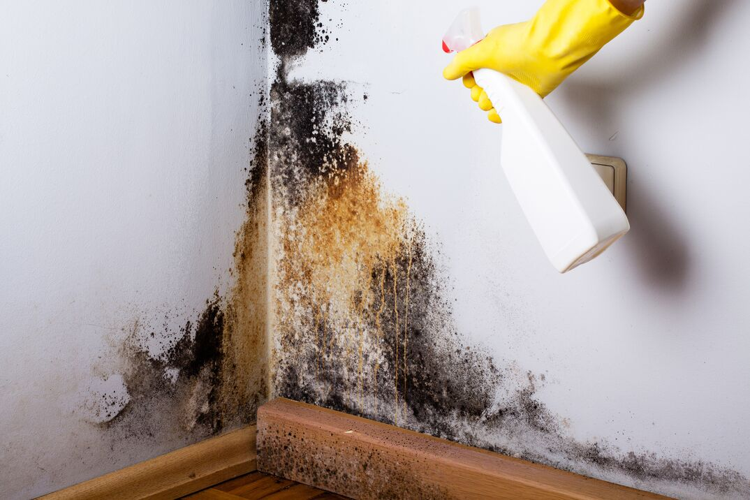spraying cleaner on black mold on walls
