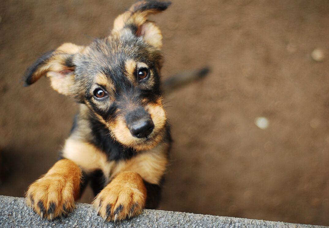 puppy looking up at camera