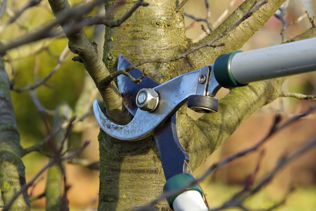 close up shot of pruning sheers cutting a tree branch