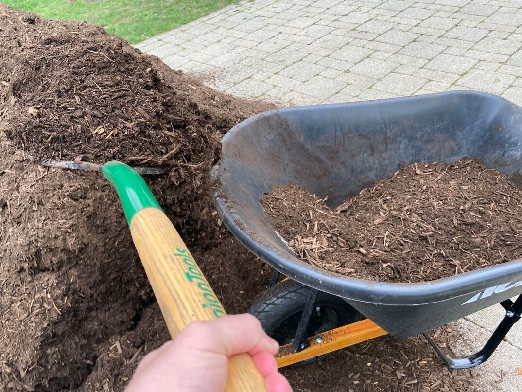 A pitchfork lifts fresh hardwood mulch from a pile and into a black wheelbarrel