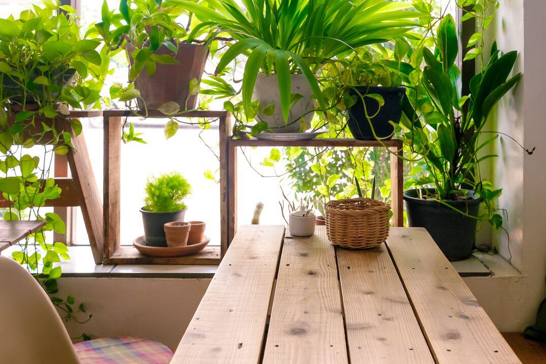 houseplants in wooden shelving