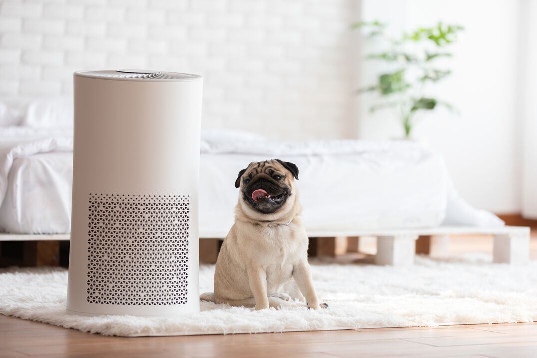 smiling pug on counter with ionizer