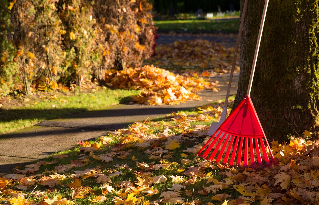 rake with leaves in the fall