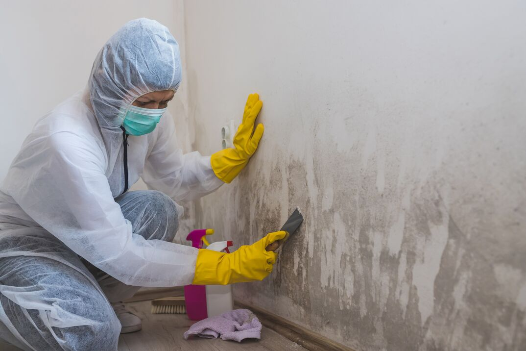 Female worker of cleaning service removes mold from wall using spray bottle with mold remediation chemicals and scraper tool
