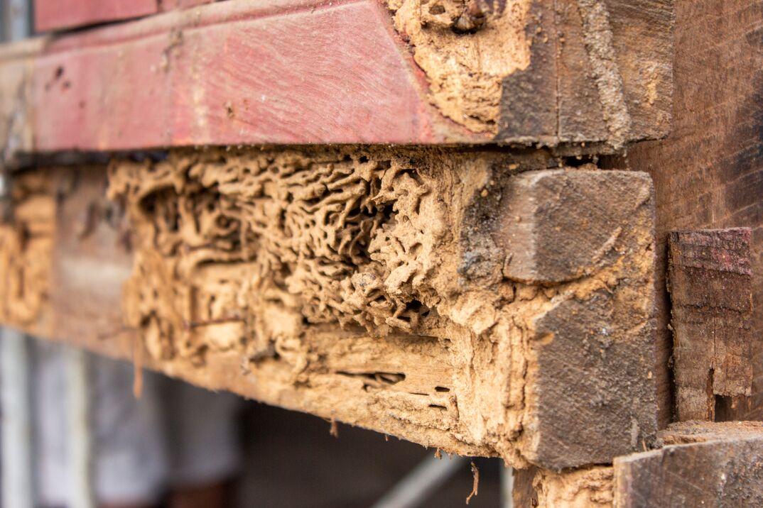 Termite damage to exterior siding of home