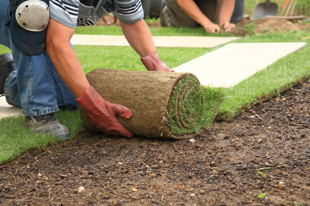 man laying sod for new garden