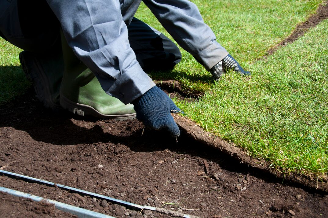 making a new lawn with fresh turn. working in the garden.