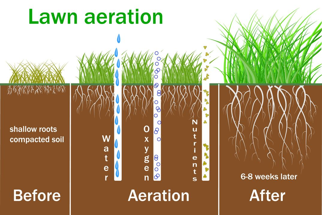 Lawn aeration for active plant growth  Free access of water and air to soil  Process steps before and after