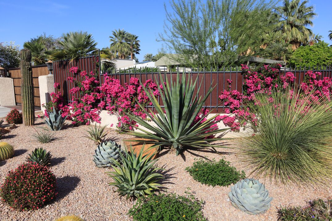 Stunning Succulent And Cactus Water Conservation Garden