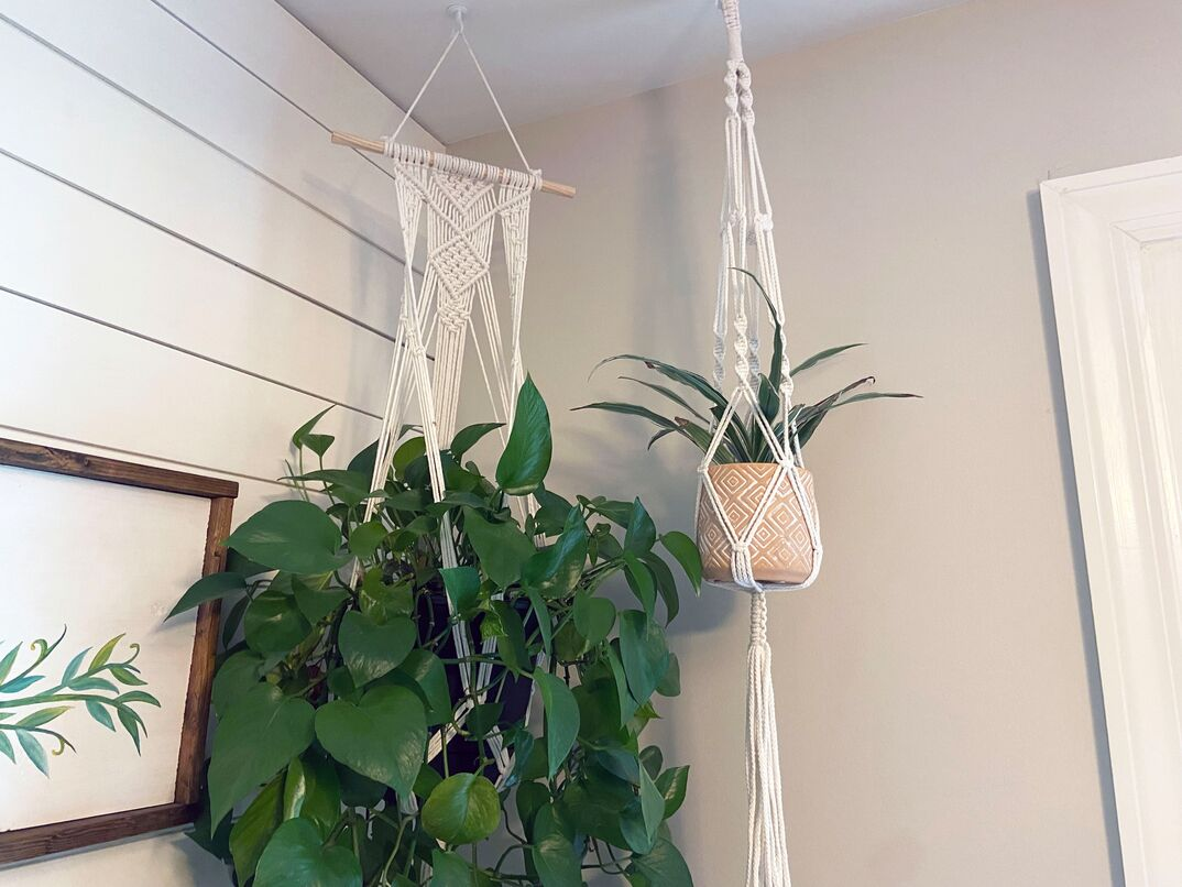 two healthy hanging plans sit in macrame hanging baskets